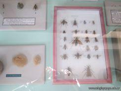 Visita al Museo de Ciencias Naturales 22