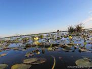 Viaje a los Esteros del Ibera 75