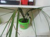 Plantas Acuaticas 14