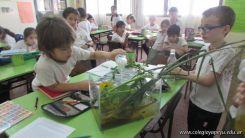 2do grado con Plantas Acuaticas 15