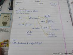 Enseñando a estudiar 11