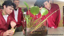 Ecosistema Artificial 1