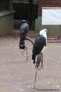 Viaje a Iguazu 101