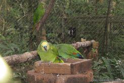 Viaje a Iguazu 90