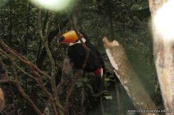 Viaje a Iguazu 91