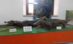 Visita al Museo de Cs. Naturales Amado Bonpland 9