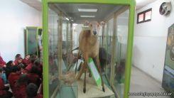 Visita al Museo de Ciencias Naturales 31
