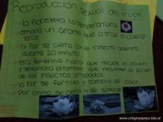 Flora autóctona - reproducción del irupé 2