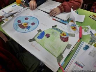 Célula animal y vegetal 12