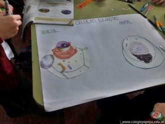 Célula animal y vegetal 7
