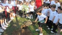 Día del árbol 5