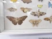 Insectos plaga 10