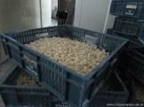 Visita a fábrica de pastas 13