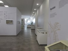 Visita al museo de Ciencias Naturales 27