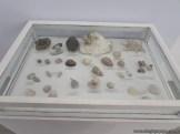 Visita al museo de Ciencias Naturales 32