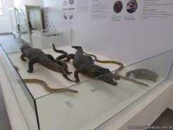 Visita al museo de Ciencias Naturales 35