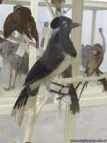 Visita al museo de Ciencias Naturales 40