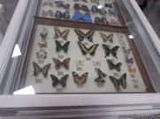 Visita al museo de Ciencias Naturales 59