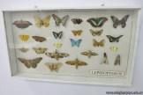 Visita al museo de Cs. Naturales 18