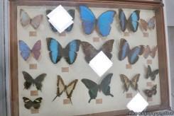 Visita al museo de Cs. Naturales 37