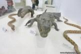 Visita al museo de Cs. Naturales 57