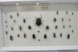Visita al museo de Cs. Naturales 69