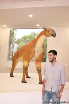 Visita al museo de Cs. Naturales 8