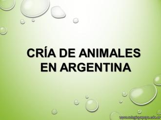 Cría de animales en Argentina 1