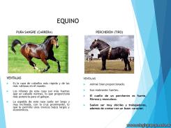 Cría de animales en Argentina 10