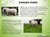 Cría de animales en Argentina 6