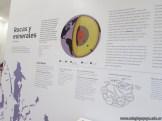 visita al museo Dr Amado Bonpland 4