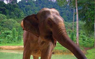 RIP Mila the Elephant