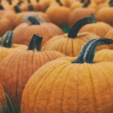 Avoid Pumpkin Spice Season (and Other Cliches)