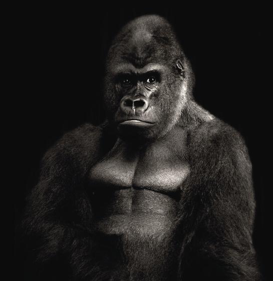 gorila-filamento-colido-pa