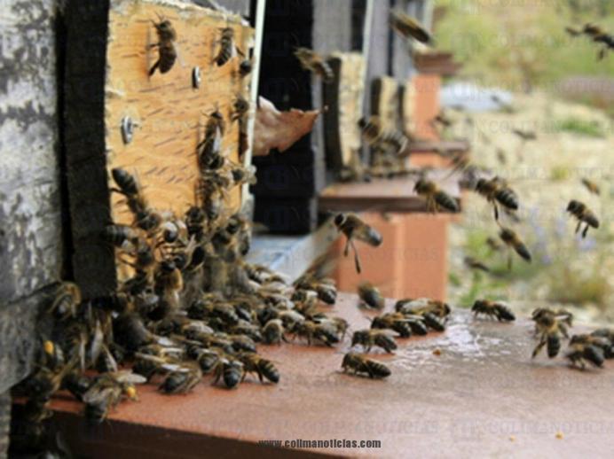 abejas china