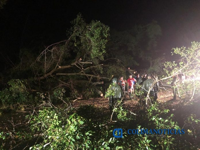 arboles caidos por lluvias 5 696x522 - Provoca lluvia afectación a 16 vehículos y caída de ocho árboles: PC