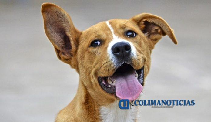 dia del perro 696x402 - Hoy es el Día Mundial del Perro