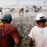 pescadores estado 150x150 - Pescadores reclaman a gobierno federal por recorte de 52% en apoyos