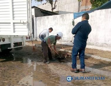 Un árbol caído y encharcamientos, saldo de la lluvia en Manzanillo (1)