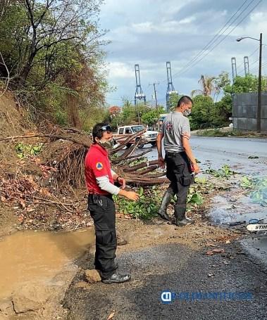 Un árbol caído y encharcamientos, saldo de la lluvia en Manzanillo (2)