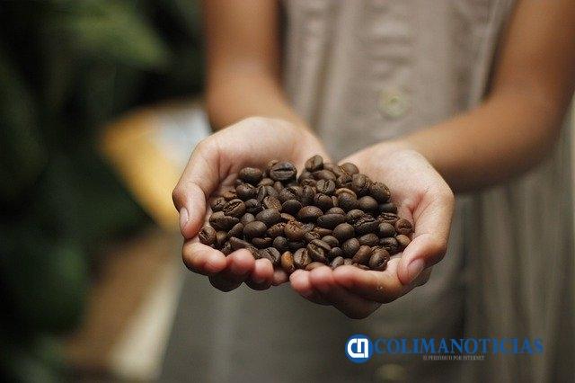 productores de café del estado