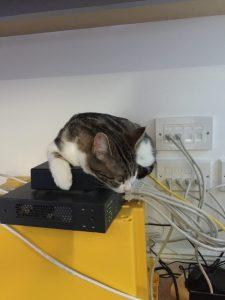 Morag - Cat5