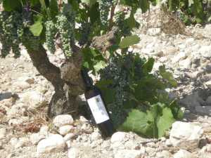 80 Year Old Monastrell Vines of Bodegas Castaño