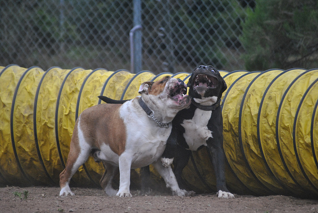 Enter at your own risk: Safety measures for breaking up a dog fight