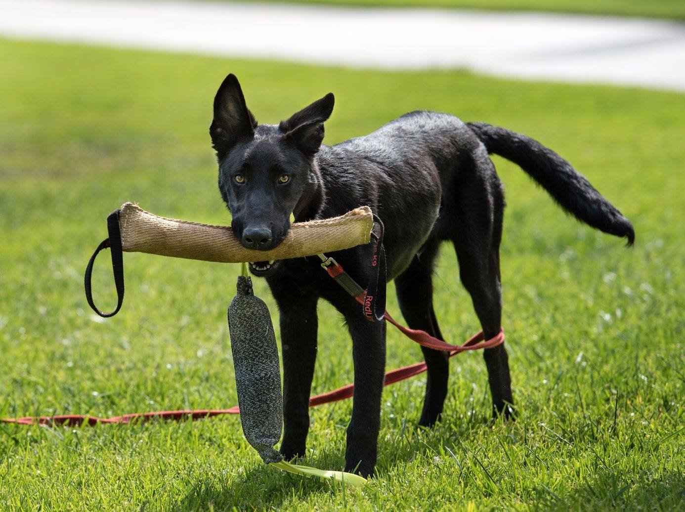 Rich Dogs, Poor Dogs, and the Working Middle Class