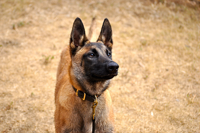I Chose Wrong – What to Look for When Hiring a Dog Trainer