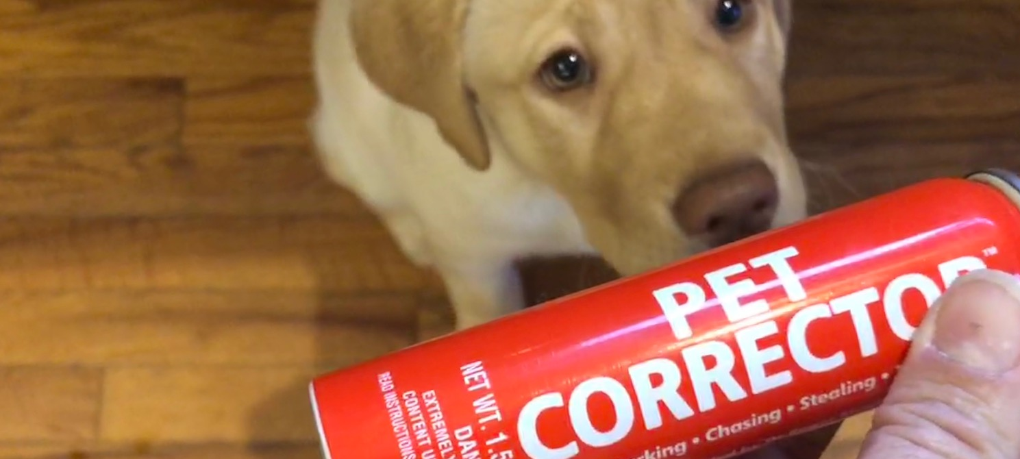 Unfavorable Odds: My Review of the Pet Corrector