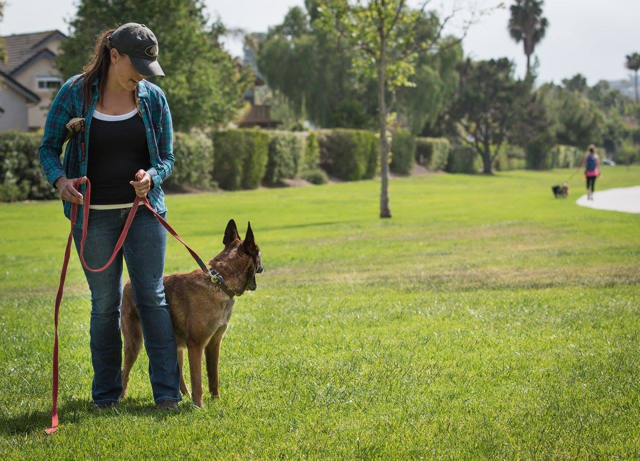 Don't Walk the Dog: Why walking your reactive dog might be making things worse