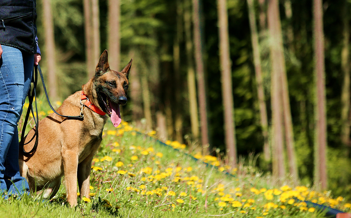 Getting Prepared: Simple tips to handling off leash dog encounters
