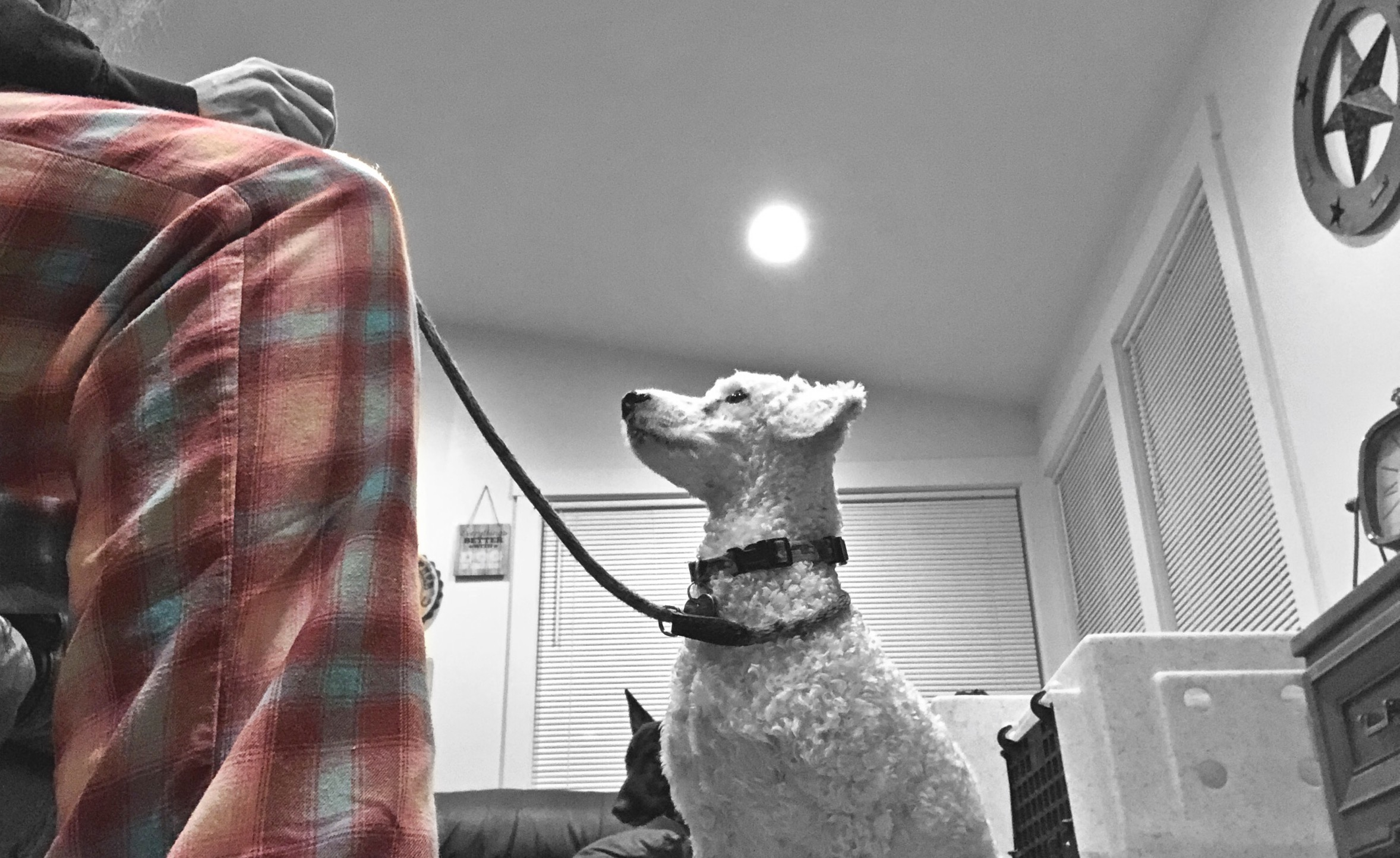 Pajama Trainers UNITE: Why you should be training your dog LESS